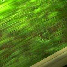 緑の中を抜けて