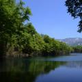 小谷村鎌池の新緑