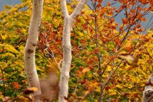 アルプス平自然遊歩道の紅葉