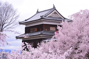 上田城跡公園公園の桜