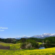 中山高原の菜の花(※5月5日追加写真)