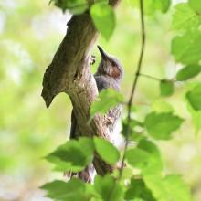 白馬村親海湿原の野鳥とミツガシワ