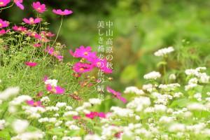 大町市美麻 中山高原の蕎麦の花